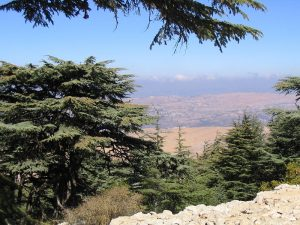 Cedars of Lebanon Under Threat